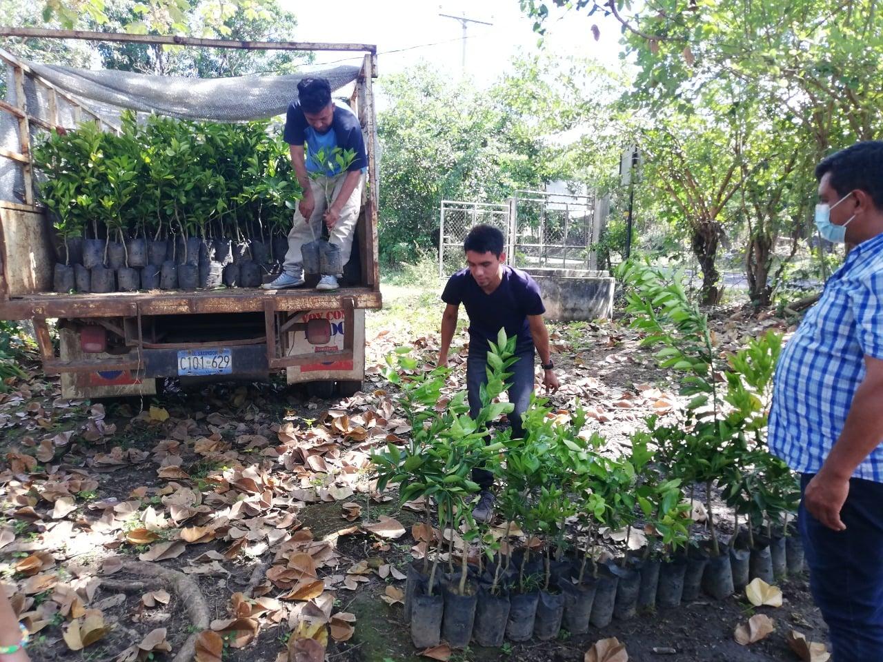 Campaña de reforestación de árboles frutales.