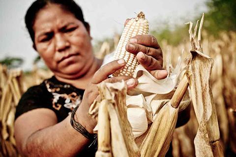 Agricultura: pequeños avances, muchas propuestas y polarización política