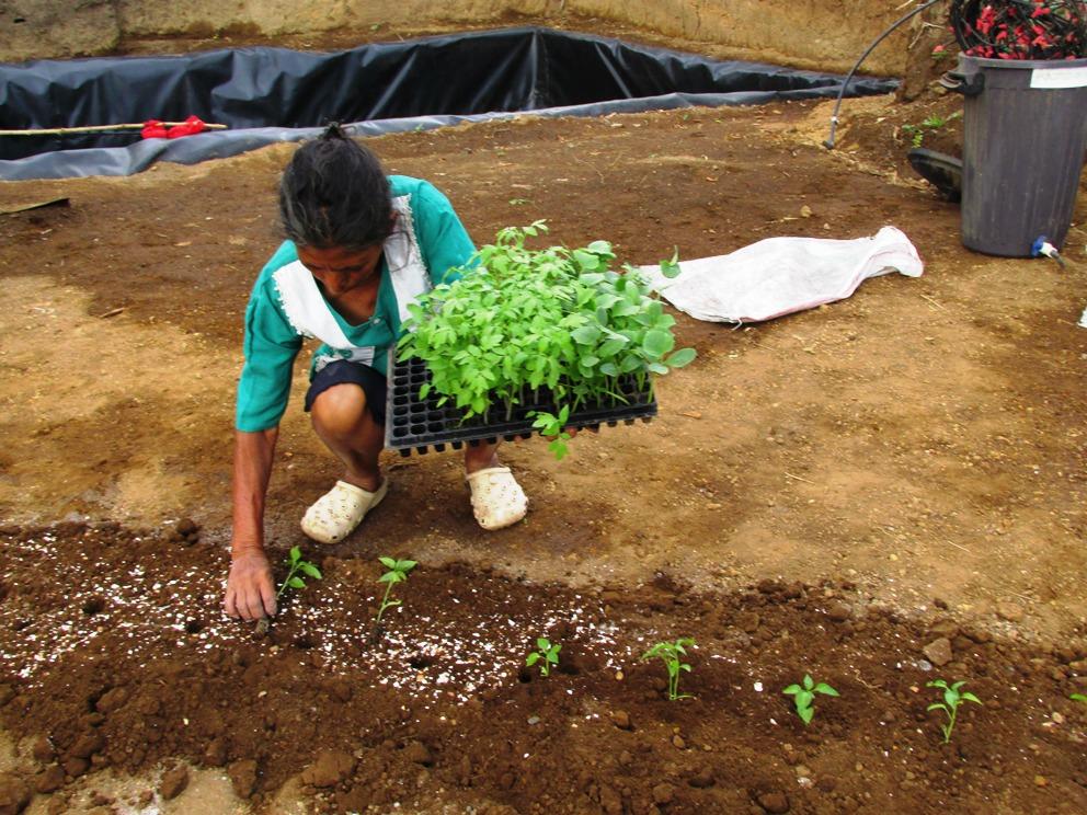 Prácticas agroecológicas para la resiliencia comunitaria