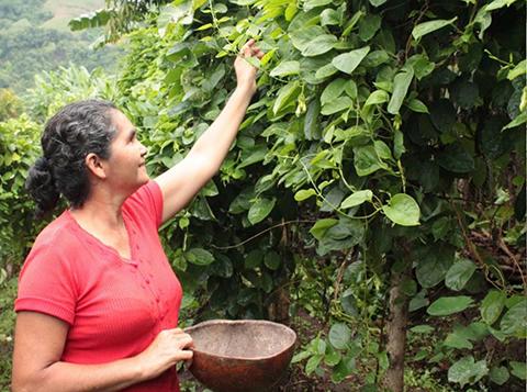 Parcela Los Mangos: Experiencia Agroecológica en El Salvador